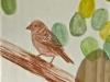paxaro3