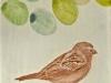 paxaro6