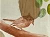 paxaro7